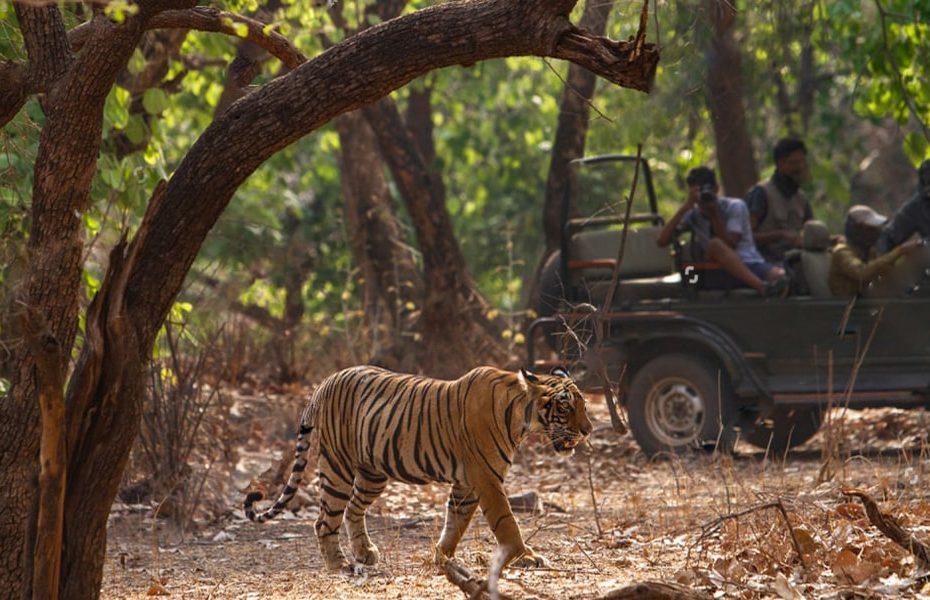 Jim Corbett Safari Tour