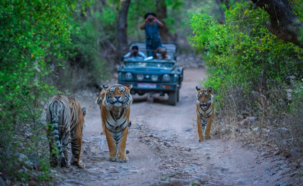Ranthambore Safari Tour